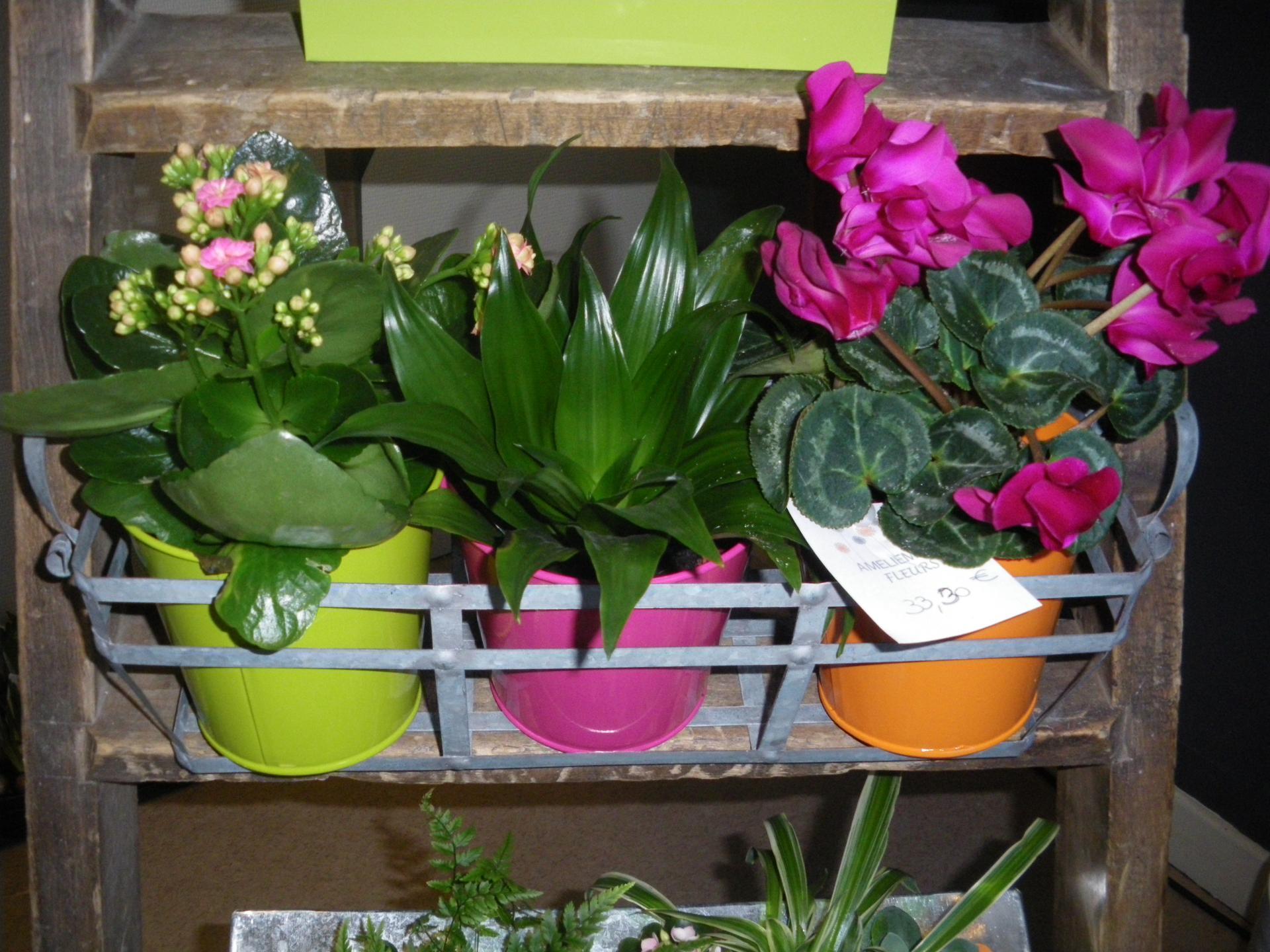 Notre offre for Fushia plante interieur ou exterieur